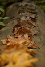 autumn trail 3